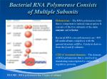 bacterial rna polymerase consists of multiple subunits