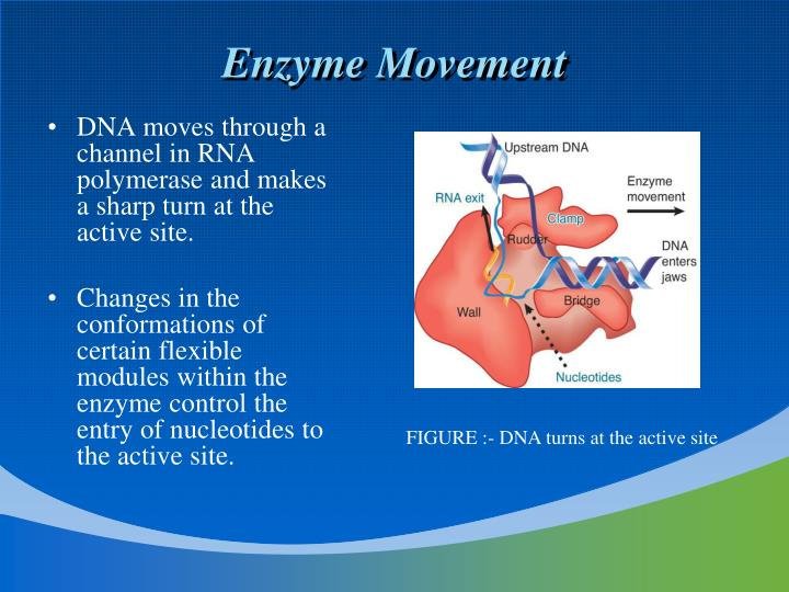 Enzyme Movement