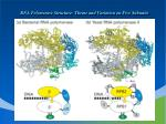 rna polymerase structure theme and variation on five subunits