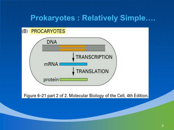 Prokaryotes : Relatively Simple….