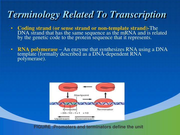 Terminology Related To Transcription