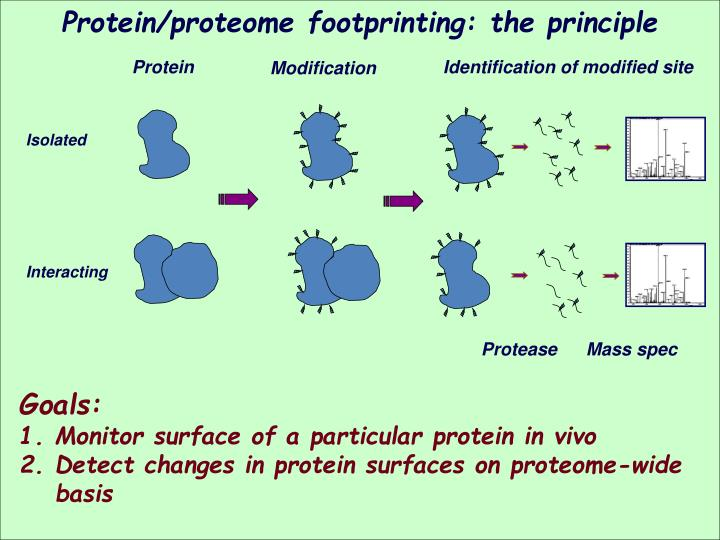 Protein/proteome footprinting: the principle