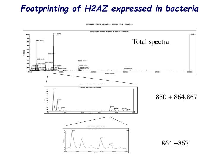 Footprinting of H2AZ expressed in bacteria