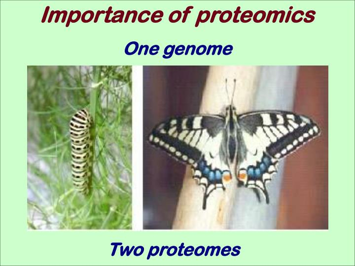 Importance of proteomics