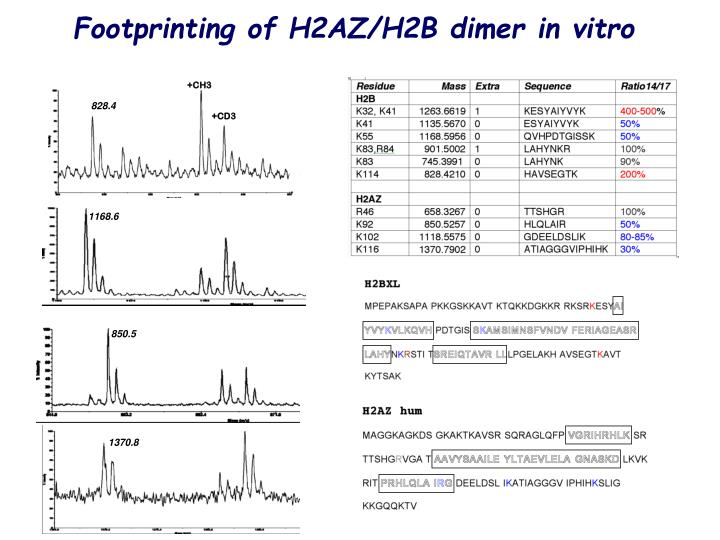 Footprinting of H2AZ/H2B dimer in vitro