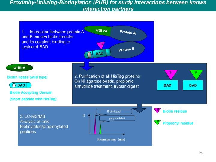 Proximity-Utilizing-Biotinylation (PUB) for study interactions between known interaction partners