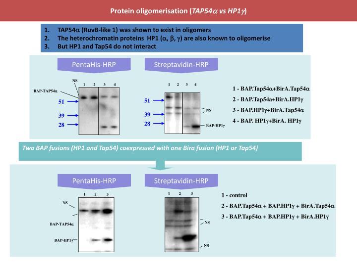 Protein oligomerisation