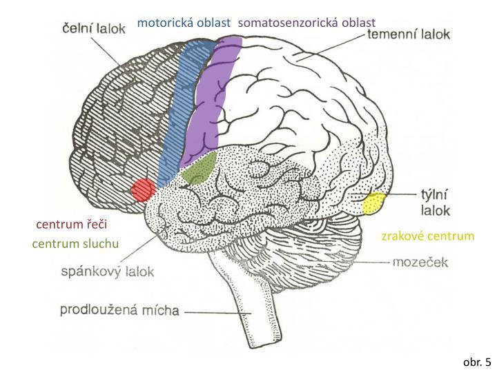 motorická oblast