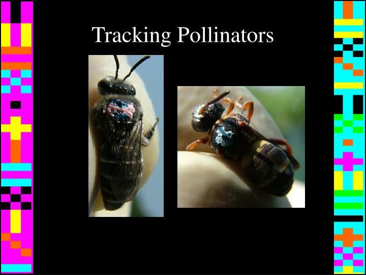 Tracking Pollinators