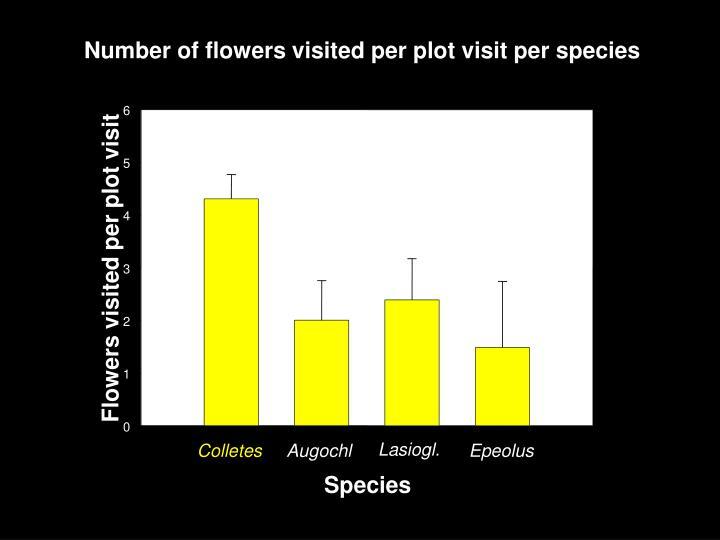 Number of flowers visited per plot visit per species