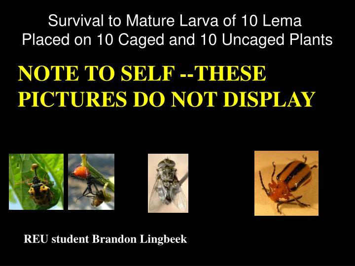 Survival to Mature Larva of 10 Lema