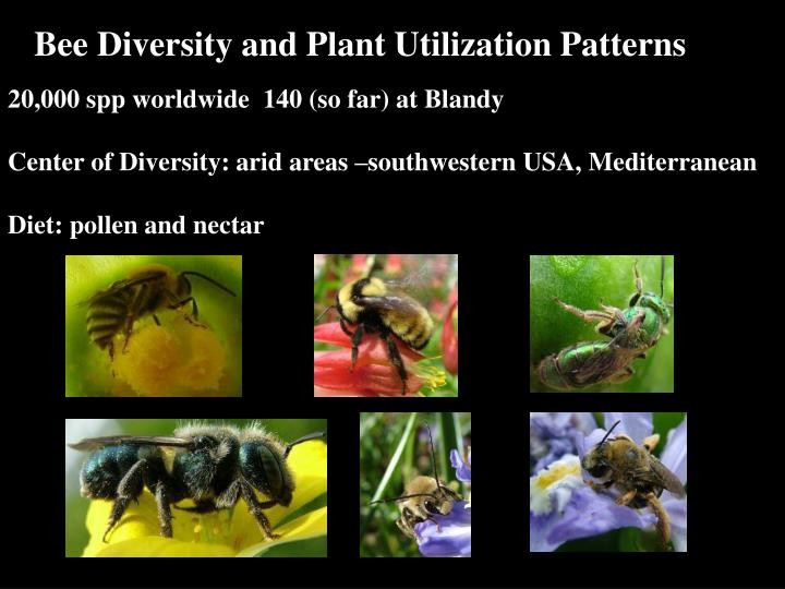 Bee Diversity and Plant Utilization Patterns