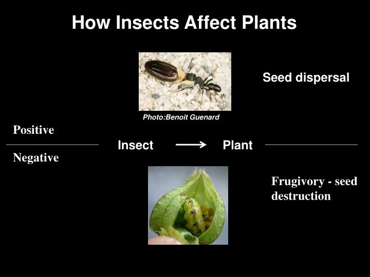 How Insects Affect Plants
