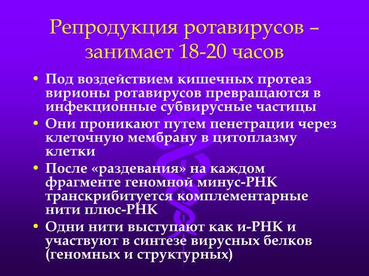 Репродукция ротавирусов – занимает 18-20 часов