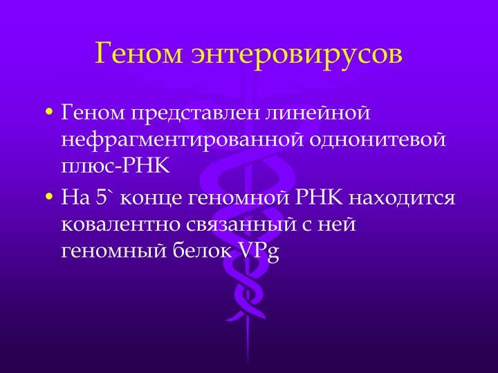 Геном энтеровирусов