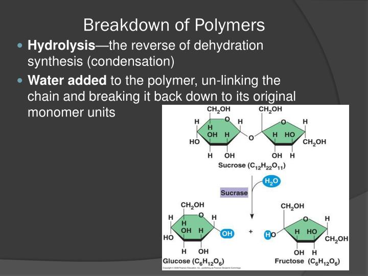 Breakdown of Polymers