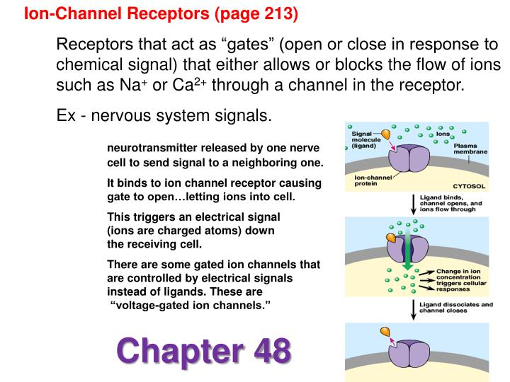Ion-Channel Receptors (page 213)