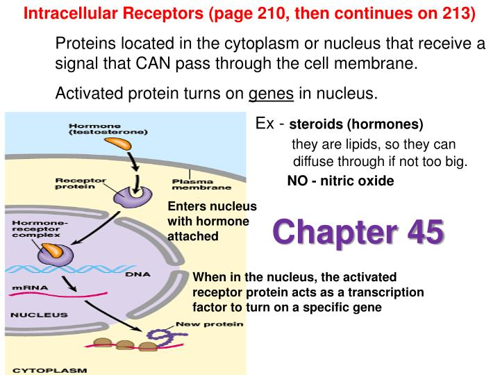 Intracellular Receptors (page 210, then continues on 213)