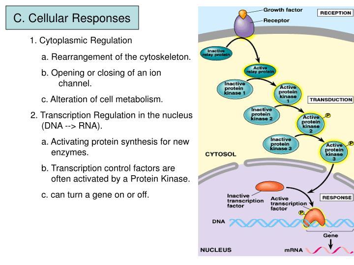 C. Cellular Responses