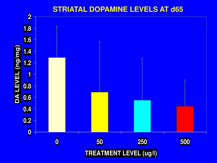 STRIATAL DOPAMINE LEVELS AT d65