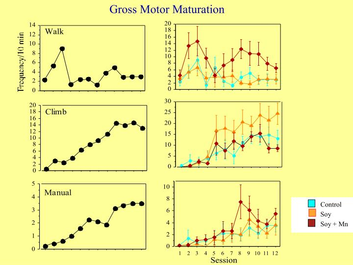 Gross Motor Maturation