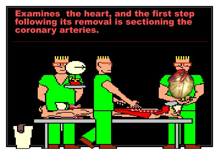 Examines  the heart, and the first step following its removal is sectioning the coronary arteries.