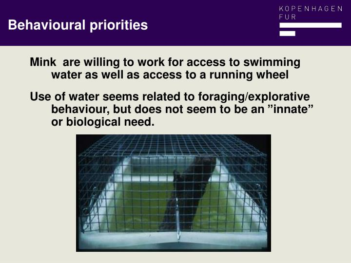 Mink  are willing to work for access to swimming water as well as access to a running wheel