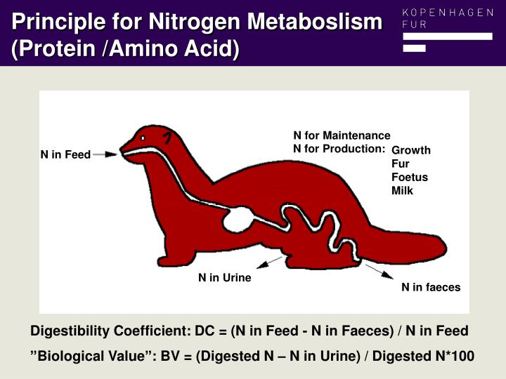Principle for Nitrogen Metaboslism