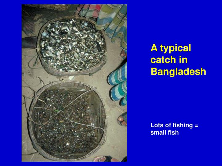 A typical catch in Bangladesh