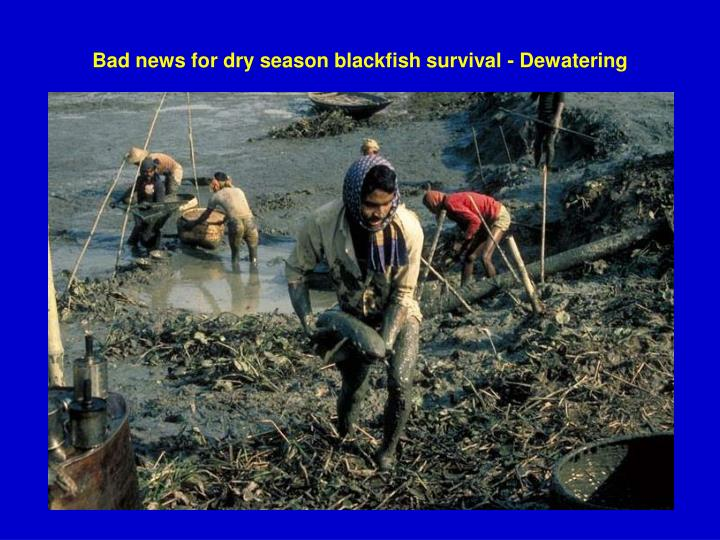 Bad news for dry season blackfish survival - Dewatering