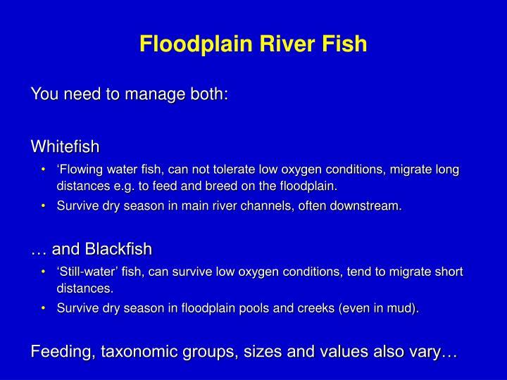 Floodplain River Fish