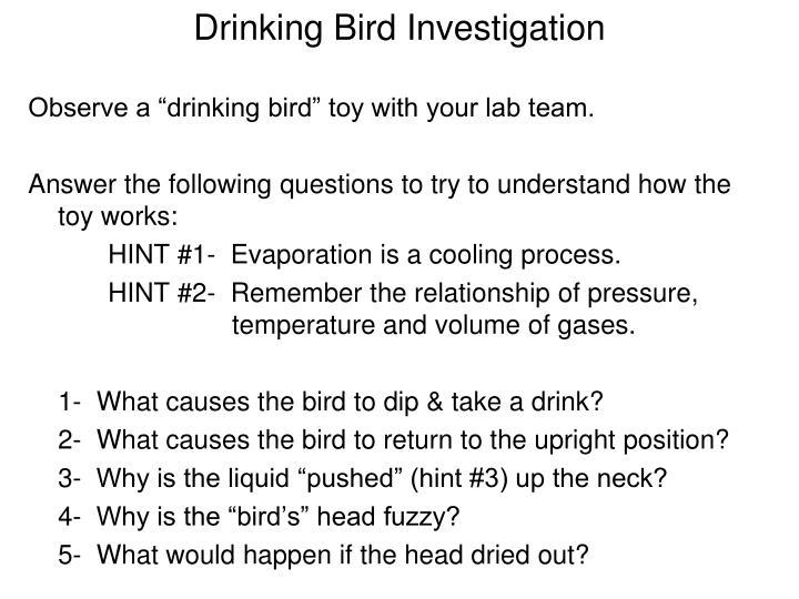 Drinking Bird Investigation