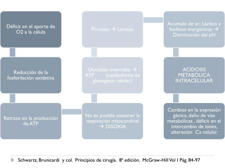 Schwartz, Brunicardi  y col.  Principios de cirugía.  8ª edición.  McGraw-Hill Vol I Pág. 84-97