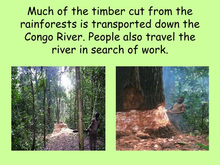 Much of the timber cut from the rainforests is transported down the Congo River. People also travel the river in search of work.