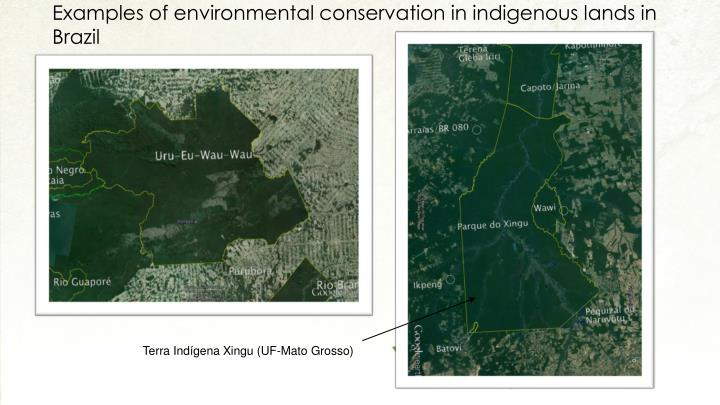 Examples of environmental conservation in indigenous lands in Brazil