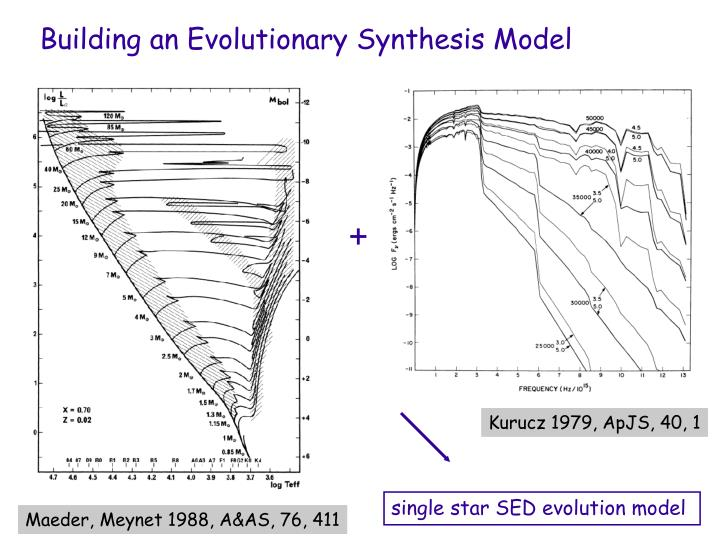 Building an Evolutionary Synthesis Model