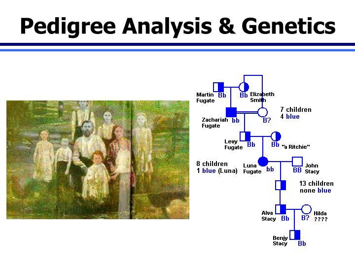 Pedigree Analysis & Genetics