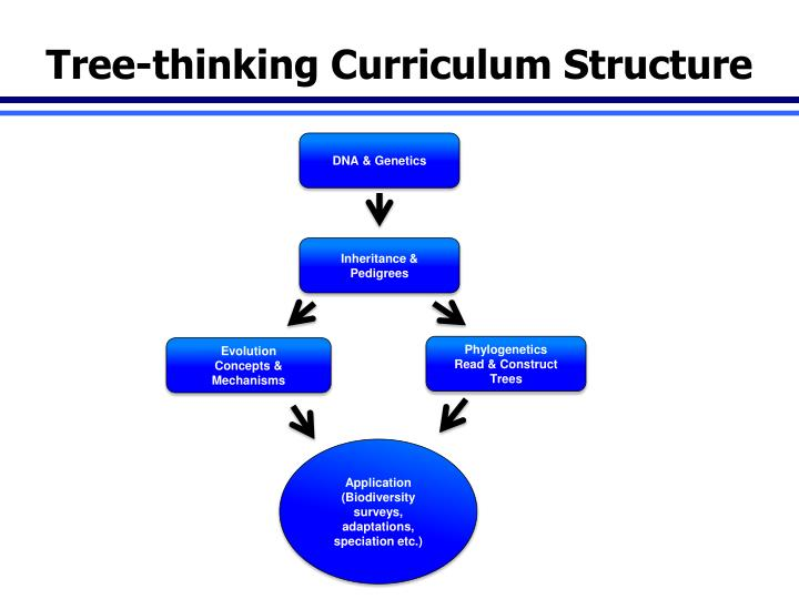 Tree-thinking Curriculum Structure