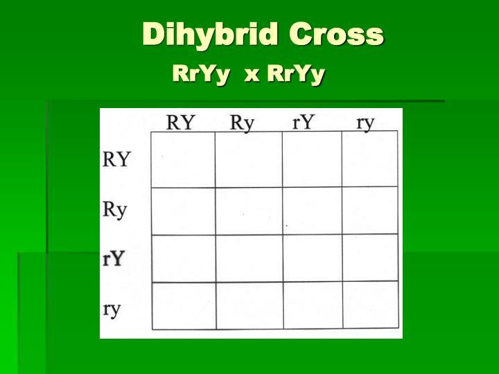 Dihybrid Cross