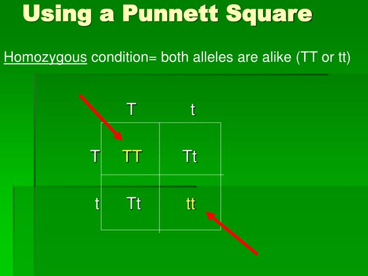 Using a Punnett Square