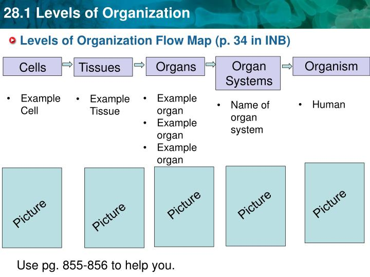 Levels of Organization Flow Map (p. 34 in INB)