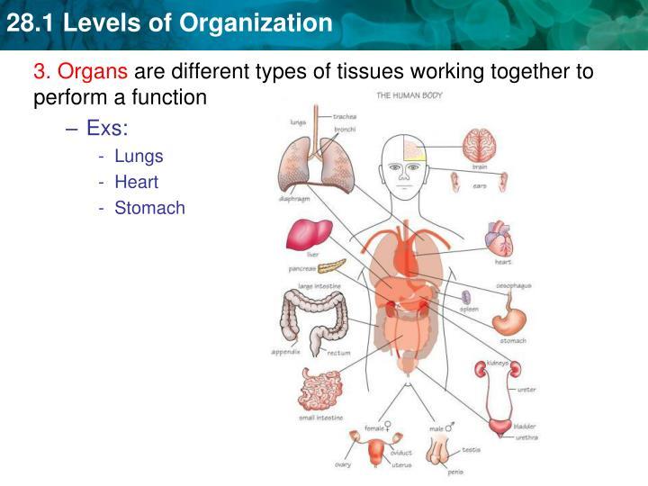 3. Organs