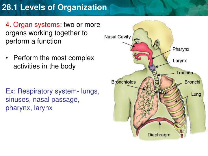 4. Organ systems