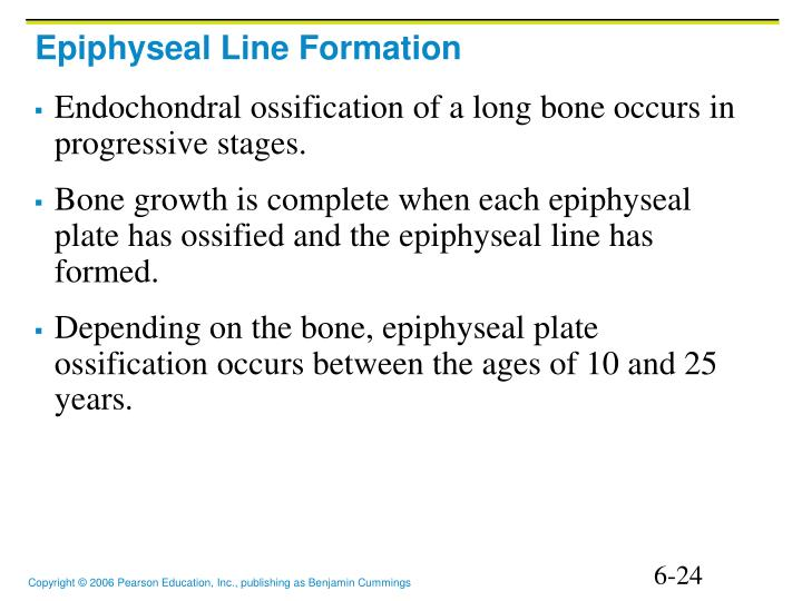 Epiphyseal Line Formation
