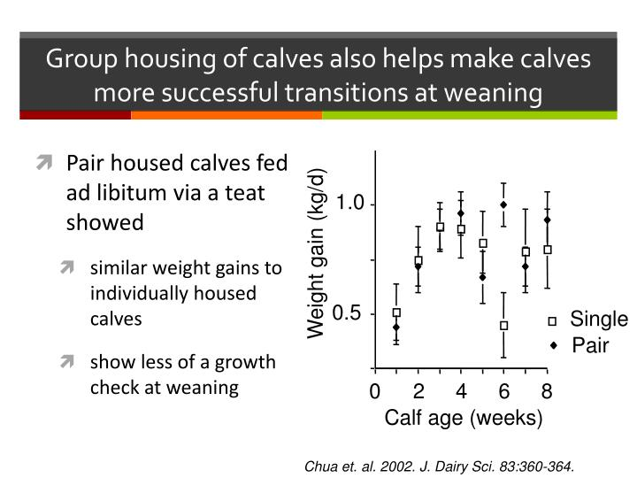 Group housing of calves also helps make calves more successful transitions at weaning