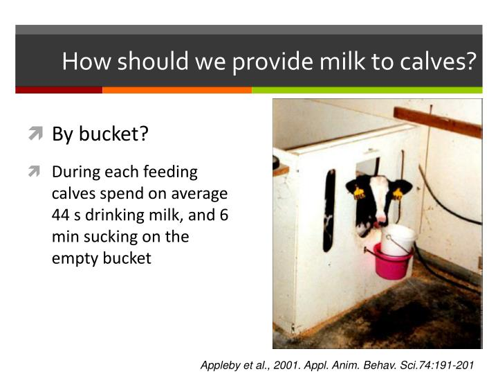 How should we provide milk to calves?