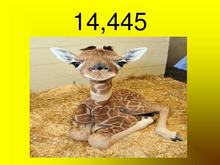 14,445