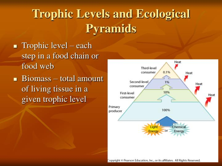 Trophic Levels and Ecological Pyramids
