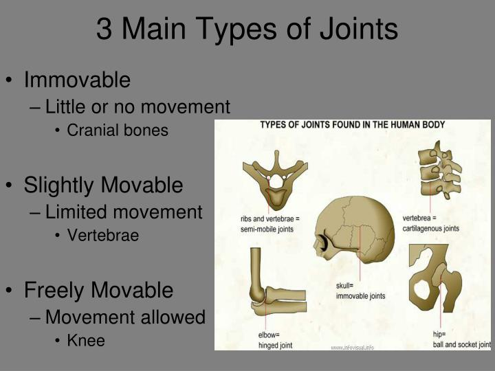 3 Main Types of Joints