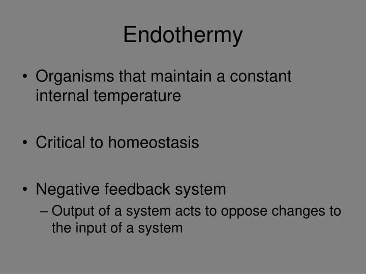 Endothermy